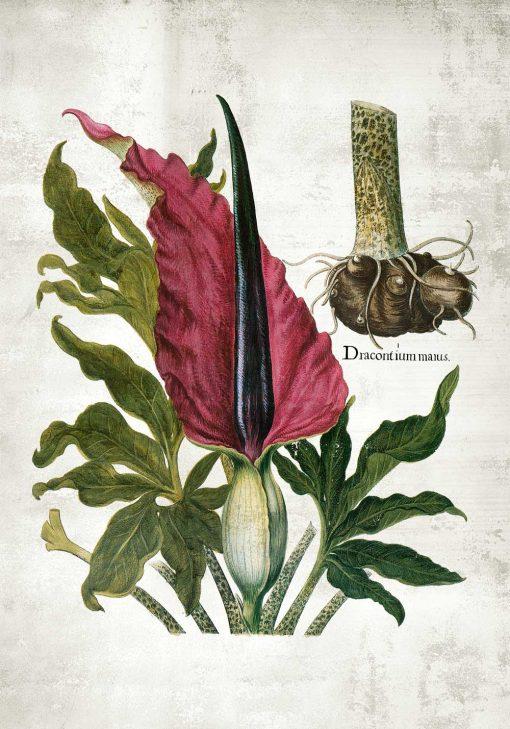 Plakat roślina lecznicza