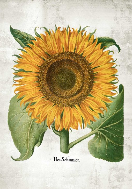Plakat roślina słońca