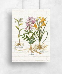 Plakat rośliny i ich nazwy łacińskie do dekoracji szkoły