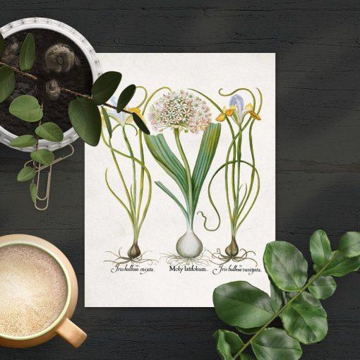 Plakat rośliny kwiatowe cebulowe