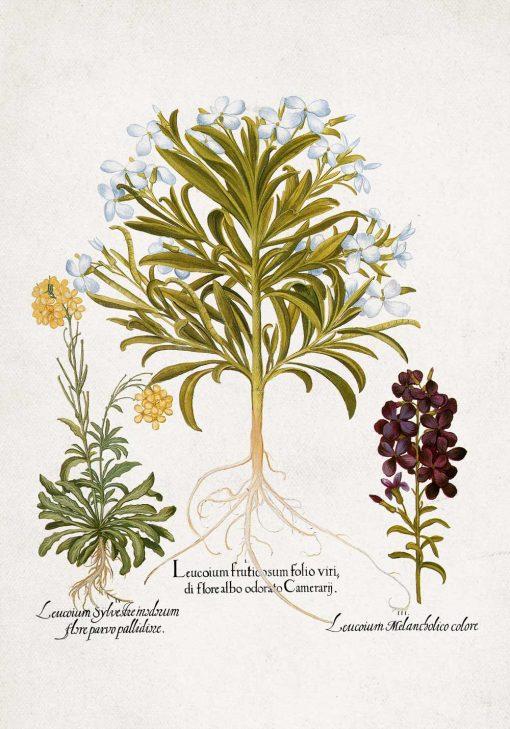 Plakat rośliny z drobnymi kwiatuszki bez ramy