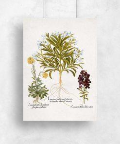 Plakat rośliny z malutki kwiatuszkami do ozdoby sklepu