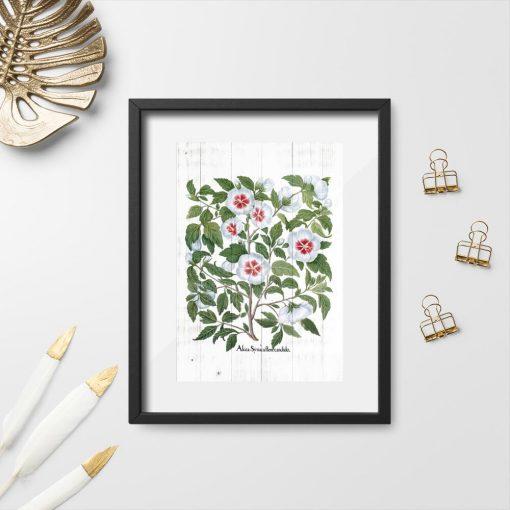 Plakat rustykalny z kwiatami malwy