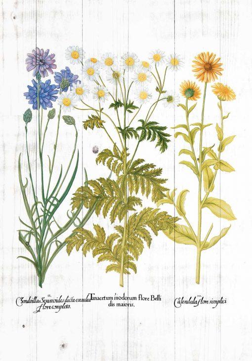 Plakat rustykalny z roślinami zielnymi