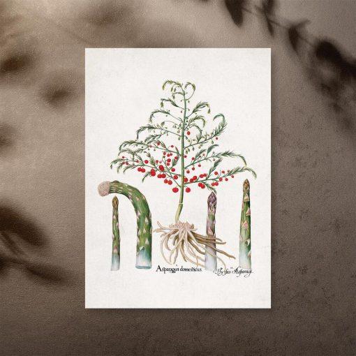 Plakat z asparagusem pierzastym do dekoracji sklepu