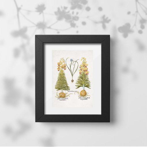 Plakat z cebulami roślinnymi i łacińskimi nazwami