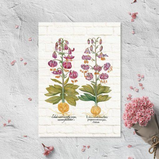 Plakat z fioletowymi liliami i nazwami po łacinie