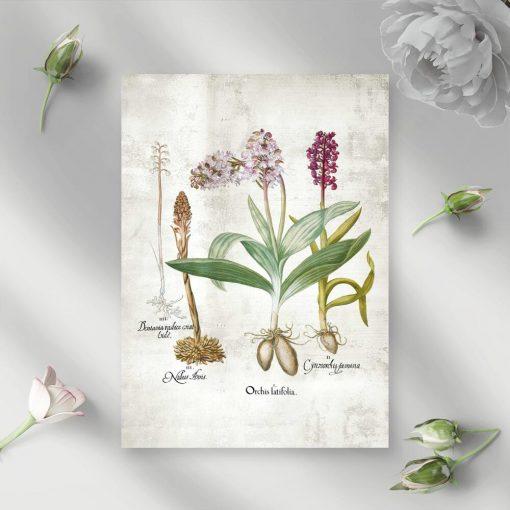 Plakat z gatunkami bylin łąkowych