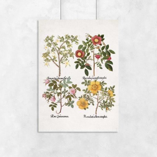 Plakat z kolorowymi różami