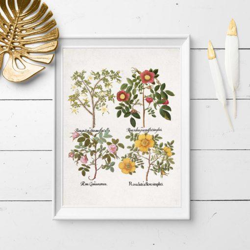 Plakat z kolorowymi różyczkami do dekoracji sklepu