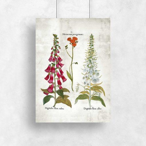 Plakat z kwiatami dekoracyjnymi do ogrodu