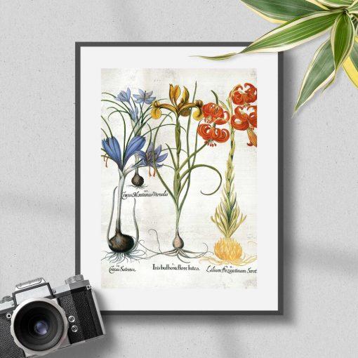 Plakat z kwiatami i ich cebulami i łacińskimi nazwami