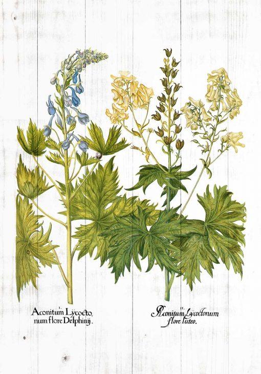 Plakat z kwiatami jasnoty białej do biura
