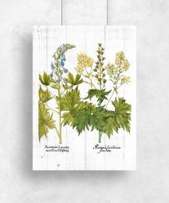 Plakat z kwiatami jasnoty białej do przedpokoju
