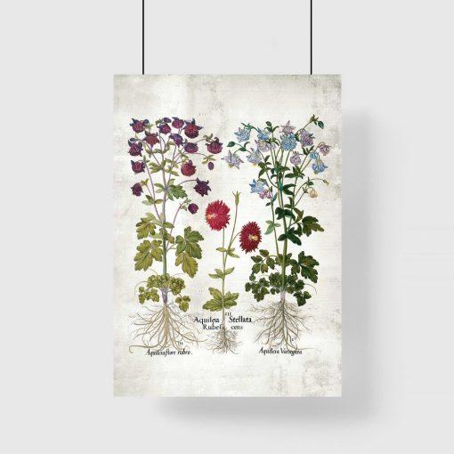 Plakat z kwiatami ogrodowymi