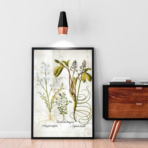 Plakat z kwiatem pęczyny błotnej do salonu