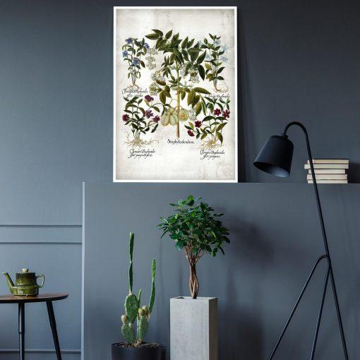 Plakat z kwiatem powojnika do gabinetu