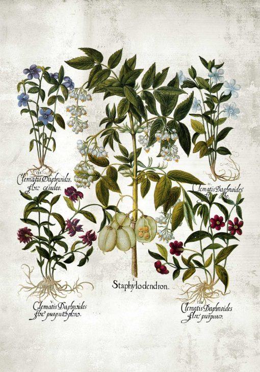 Plakat z kwiatem powojnika do kuchni