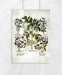 Plakat z kwiatem powojnika do przedpokoju