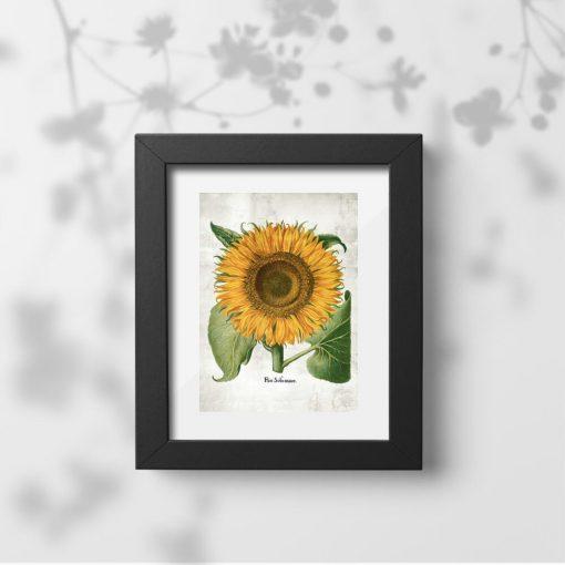 Plakat z kwiatem słonecznika