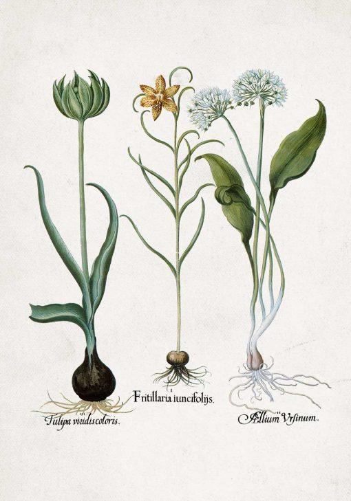 Plakat z kwiatem zielonego tulipana do jadalni