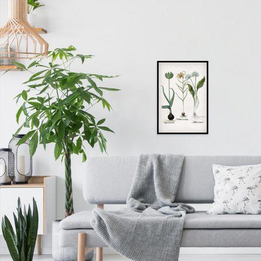 Plakat z kwiatem zielonego tulipana do salonu