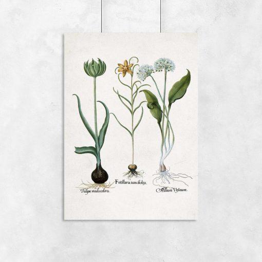 Plakat z kwiatem zielonego tulipana na przedpokój