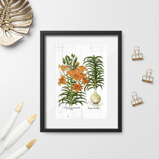 Plakat z łacińskimi nazwami lilii w kolorze pomarańczowym