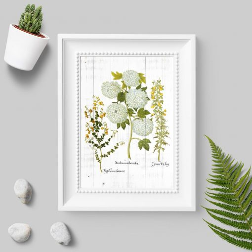 Plakat z łacińskimi nazwami roślin