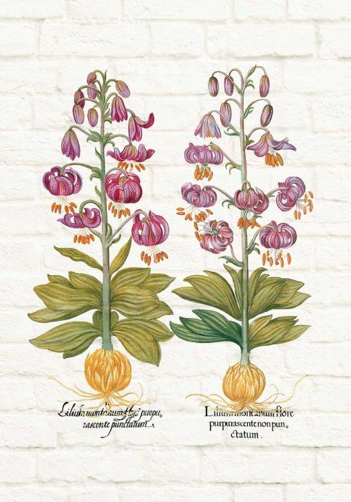 Plakat z motywem fioletowej lilii - gatunki