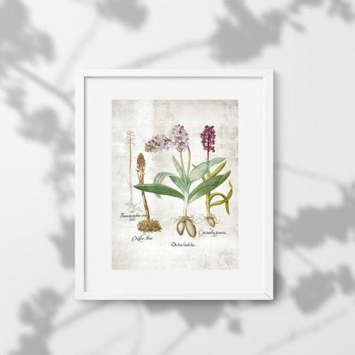Plakat z motywem kwiatów łąkowych