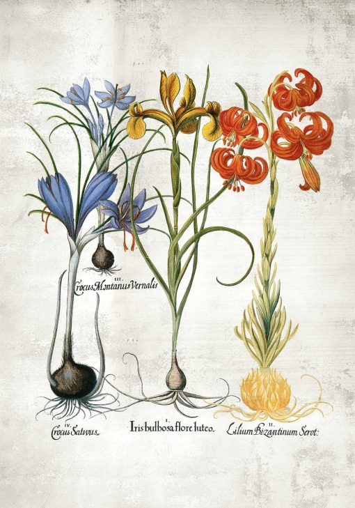 Plakat z motywem kwiatowym do ozdoby szkolnej klasy