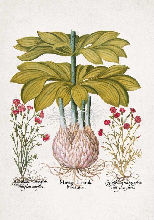 Plakat z motywem lilii złotogłów