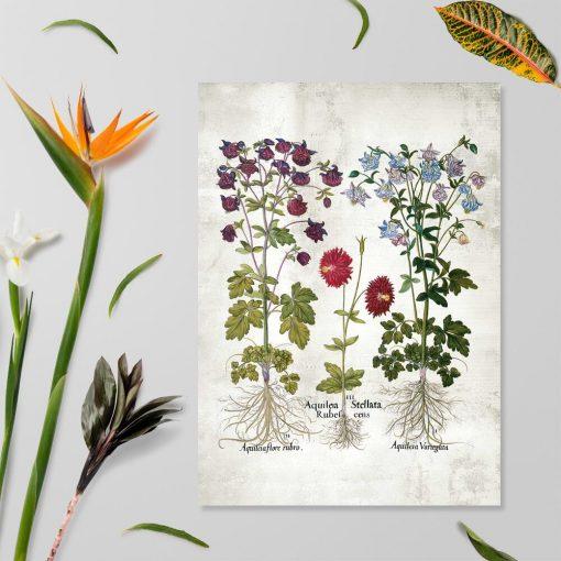 Plakat z motywem ogrodowych kwiatów - -orlików