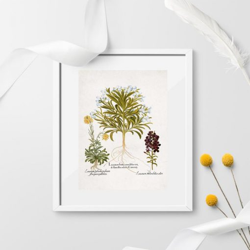 Plakat z motywem roślin łąkowych do powieszenia w szkole