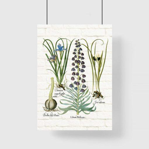 Plakat z motywem roślinnym i nazwami łacińskimi