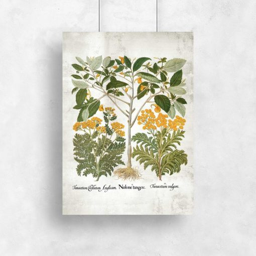 Plakat z motywem wrotycza i innych roślin