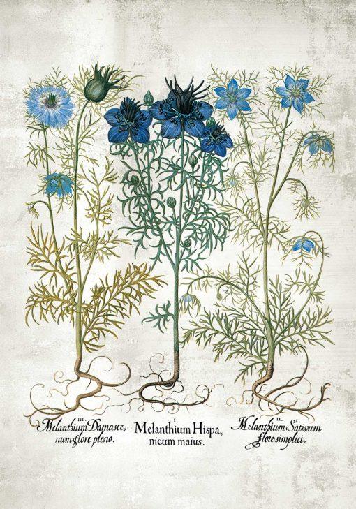 Plakat z niebieskimi kwiatuszkami łąkowymi