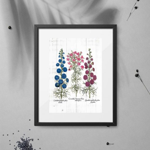 Plakat z odmianami kwiatów polnych