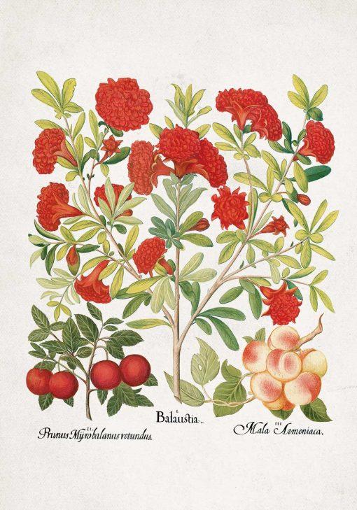 Plakat z owocami jadalnymi i czerwonymi kwiatami