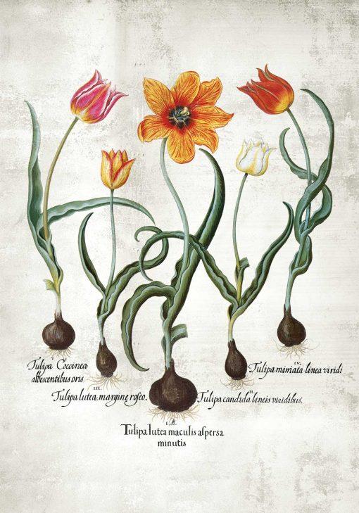 Plakat z płomienistymi tulipanami na przedpokój