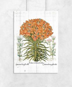 Plakat z pomarańczową lilią tygrysią do biura