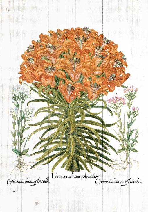Plakat z pomarańczową lilią tygrysią do jadalni