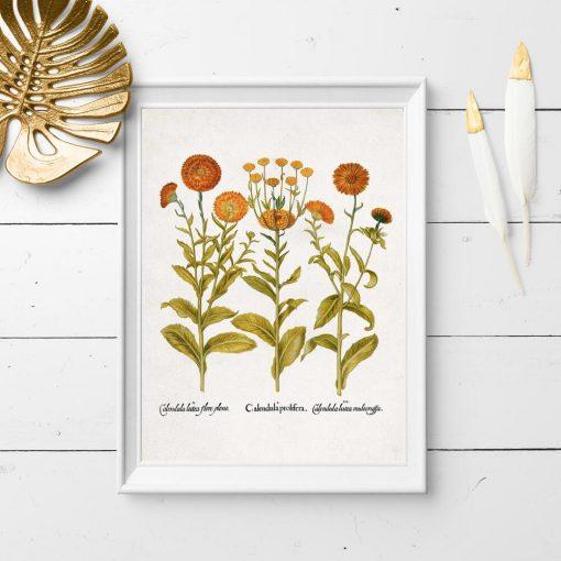 Plakat z pomarańczowymi kwiatkami - nagietki
