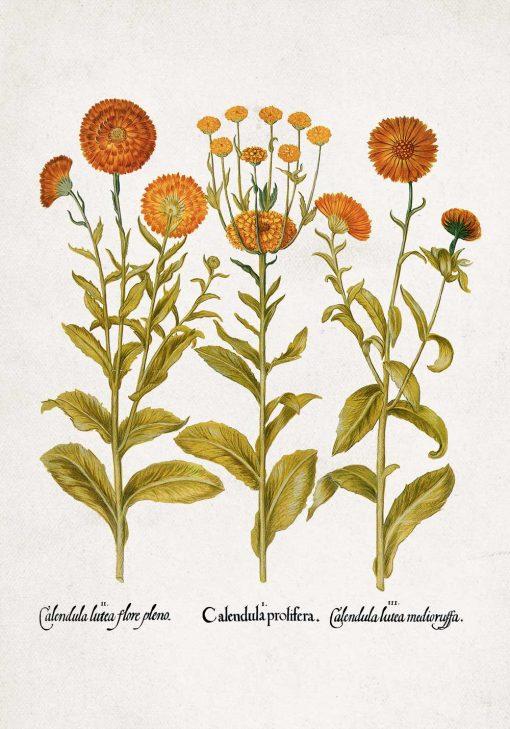 Plakat z pomarańczowymi kwiatuszkami do oprawienia