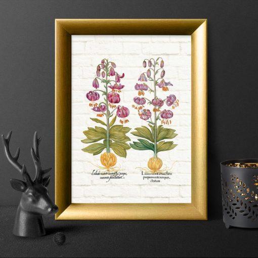 Plakat z purpurowymi liliami i łacińskimi nazwami