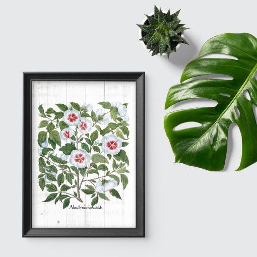 Plakat z rośliną z rodziny ślazowatych na tle desek