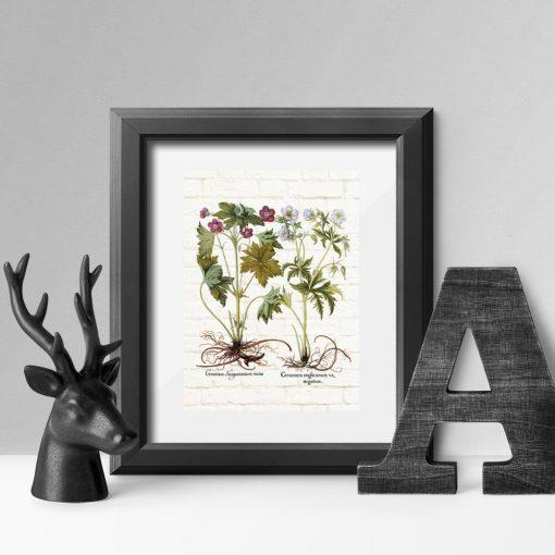 Plakat z roślinami do leczenia