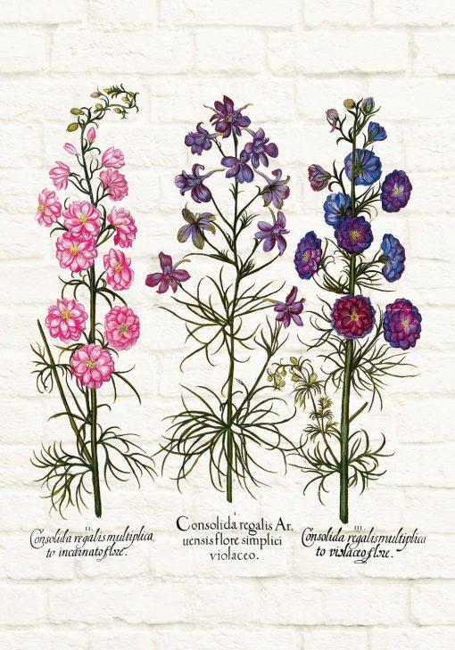 Plakat z roślinami dzikorosnącymi