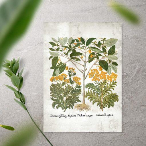Plakat z roślinami i łacińskimi nazwami